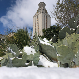 Snow on a cactus in front of the UT Tower